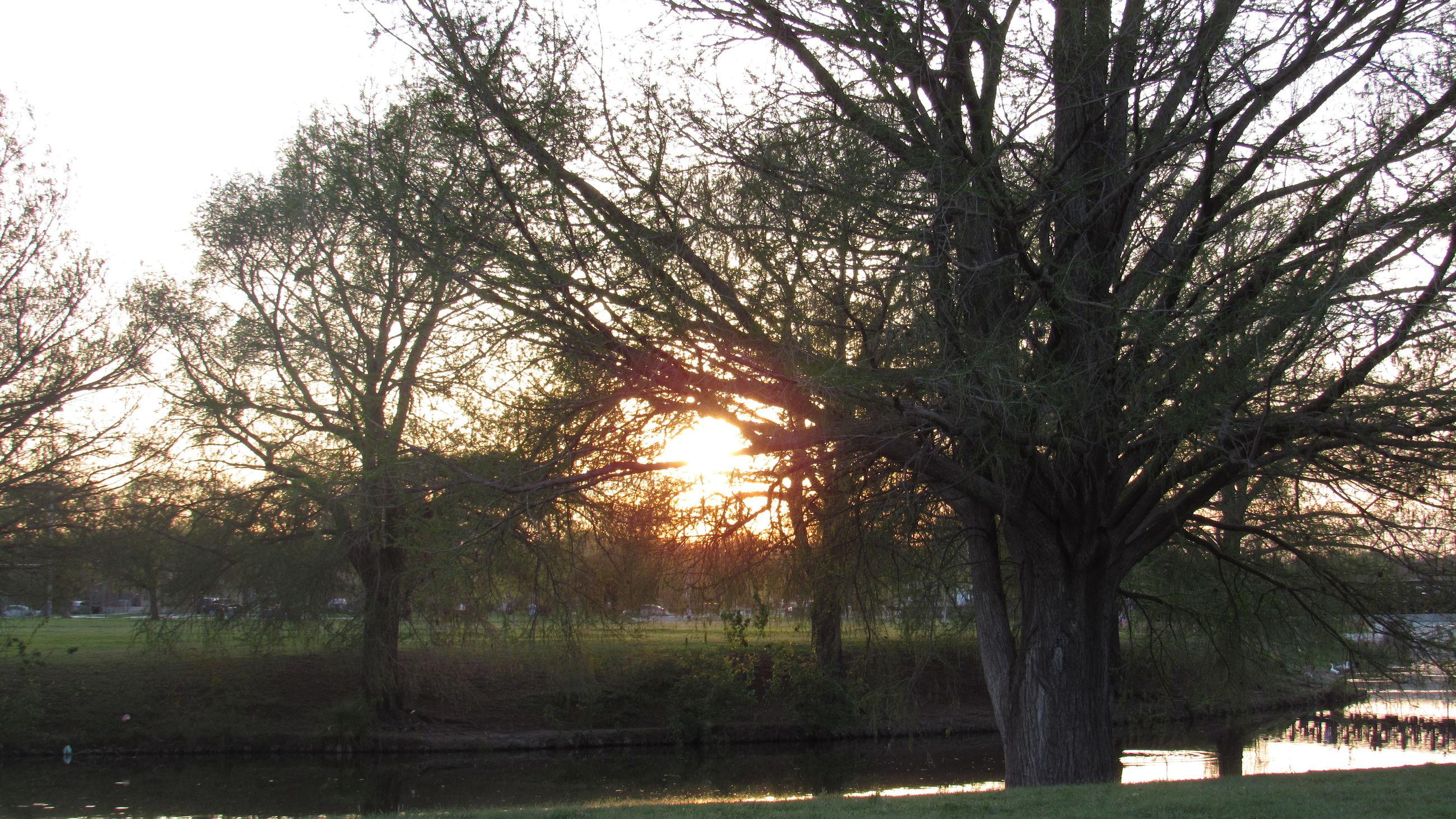 tree, tranquility, tranquil scene, sunset, beauty in nature, scenics, sun, grass, nature, sunlight, bare tree, growth, landscape, sky, idyllic, tree trunk, no people, non-urban scene, outdoors, sunbeam, orange color, remote, grassy, park, green color, travel destinations, non urban scene