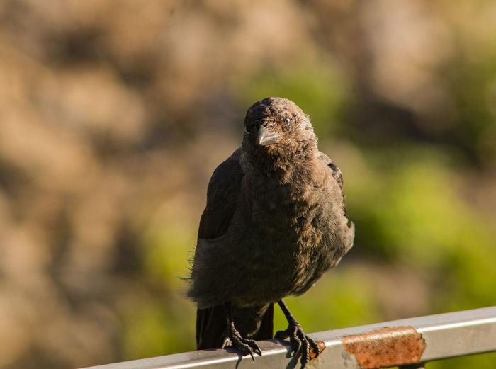 SONY DSC Bird