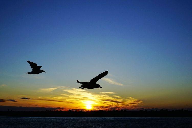 夕日とカモメ Sunset