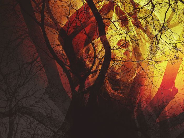 Dead trees with skull ghost shadow in yellow and red light - Concepts of Halloween, Friday the 13th, mystery. Dark area on the bottom-left corner is for adding text (copy space). Abstract Shadow Backgrounds Textured  Close-up No People Day Nature Spooky Halloween Friday 13th Wood Night Branches Satan Devil Evil Skull The 6th Background Horror Night Death Witch Scary Creative