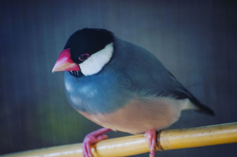 First Eyeem Photo Zoology Animal Themes Bird Close-up Nature Wildlife Beauty In Nature Blue