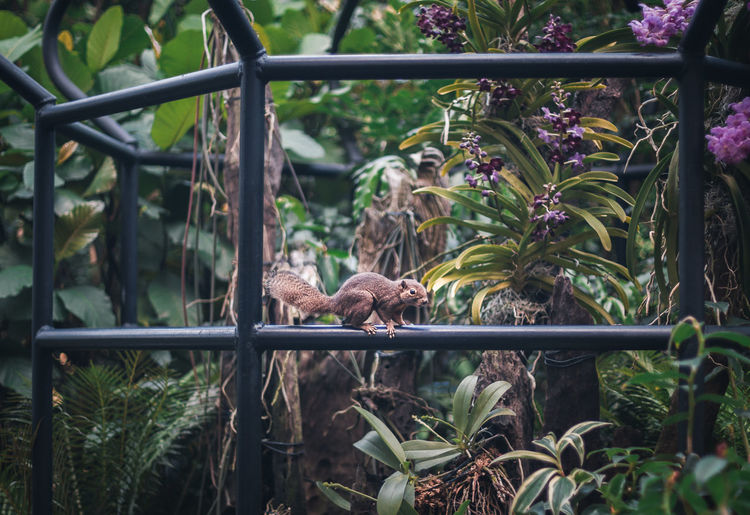 View of a fence against plants