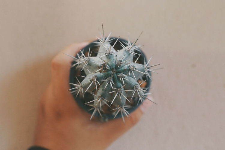 Close-Up Of Human Hand Holding Cactus By Wall
