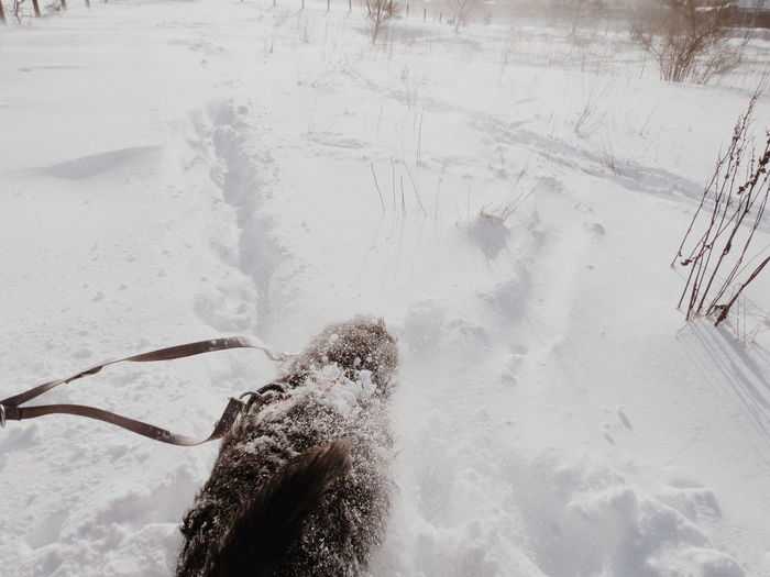 disappearing in the snow #labradoodle #deepsnow #snow #snowstorm #blizzard #dog #cute #pets #funny #funnydog Walk Dog Walking Motion