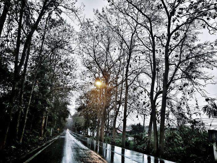 Wet road Tree