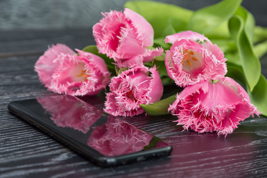Phone Smartphone Cellphone Waiting Call Date Love Meeting Pink Tulips Aniversary Beauty In Nature Bouquet Bouquet Of Flowers Celebration Event Close-up Day First Flowers Flower Flower Head Flowers Fragility Freshness Gift Nature Spring Spring Flowers Tenderness Tulip White