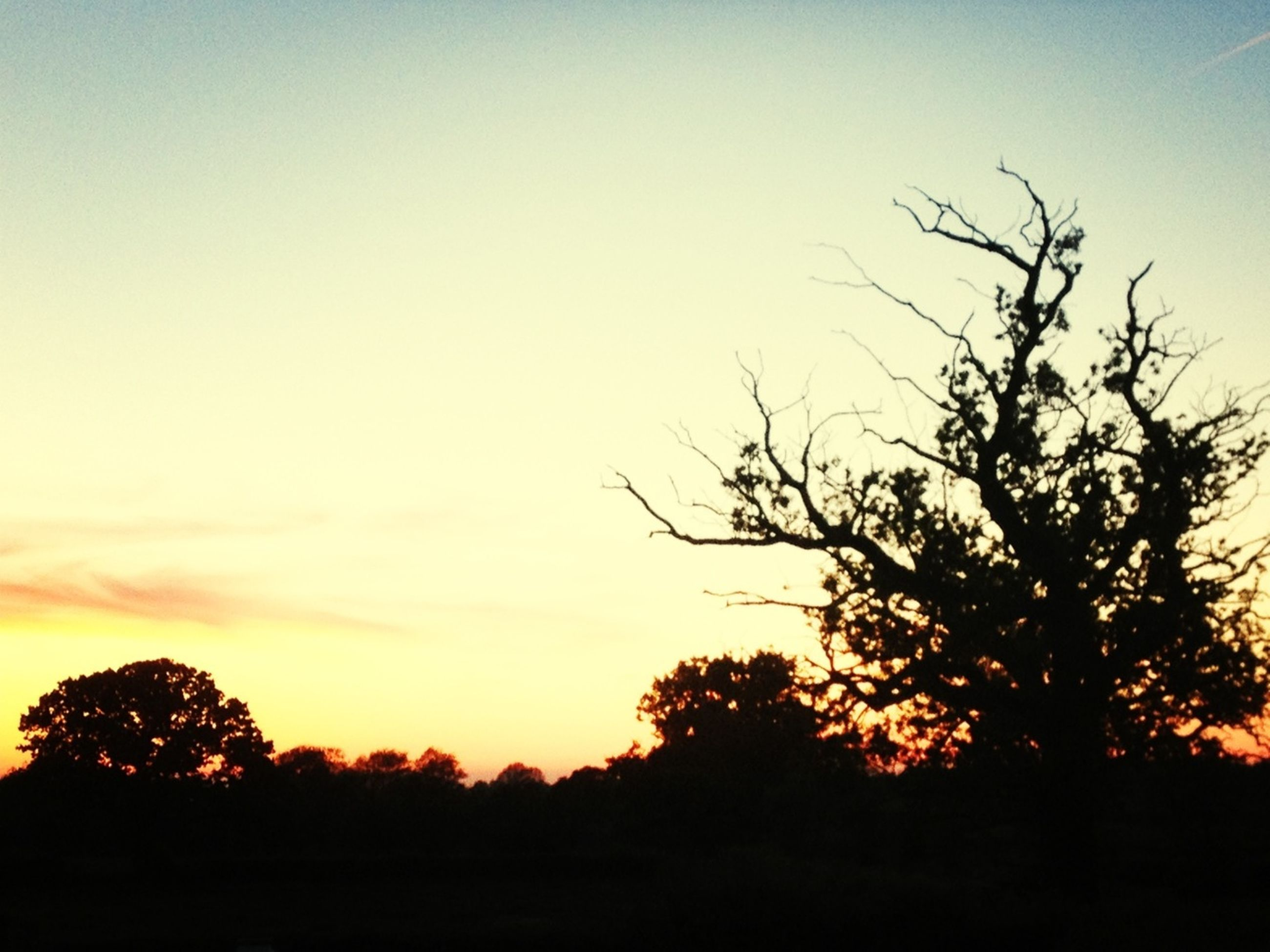 silhouette, sunset, tree, tranquility, tranquil scene, scenics, beauty in nature, bare tree, sky, nature, orange color, landscape, idyllic, branch, clear sky, copy space, dusk, growth, non-urban scene, outdoors