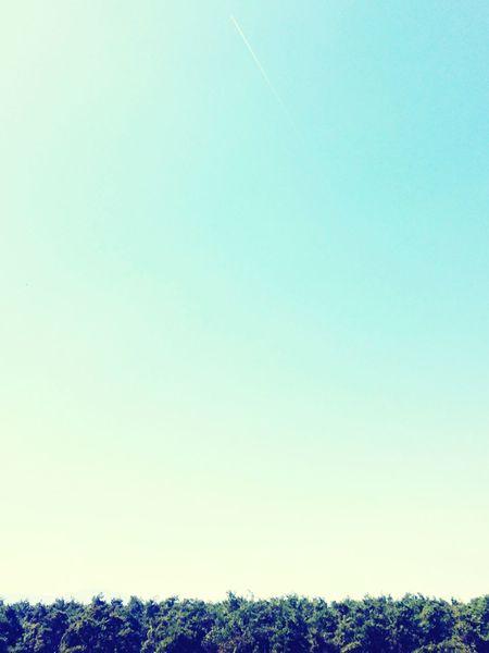 Denizli Teknokent Gokyuzu Agac Yalnızlık Bulut Looking To The Other Side