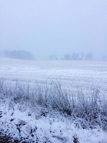Winter Cold Temperature Snow Weather Nature Frozen Tranquil Scene Fog Landscape Beauty In Nature Tranquility Frost Cold White Color Snowing Ice Scenics Field No People Outdoors