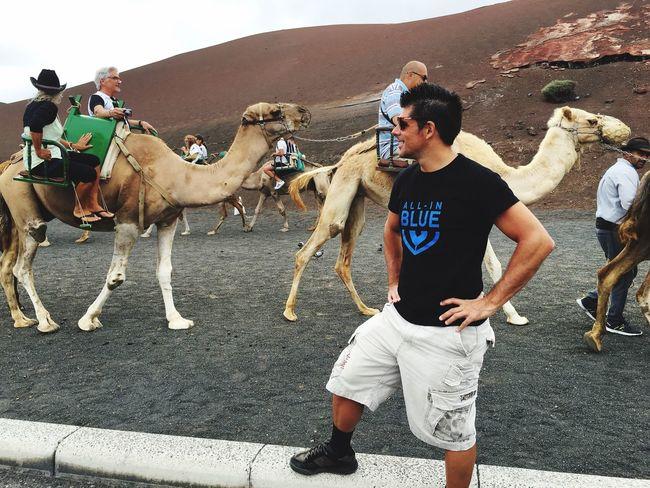 Camel ride Canarias Camel Riding Camels Camello Camelriding Cameltoe Camel Racing Camel Safari