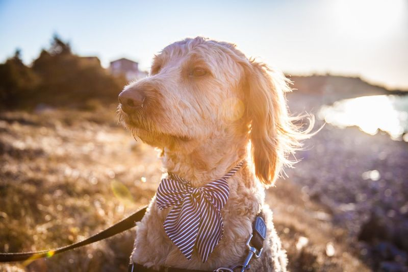 Sunlight One Person Nature One Animal Focus On Foreground Real People Mammal Domestic Day Domestic Animals Sky Pets Looking Lifestyles Headshot Leisure Activity Canine Outdoors Lens Flare