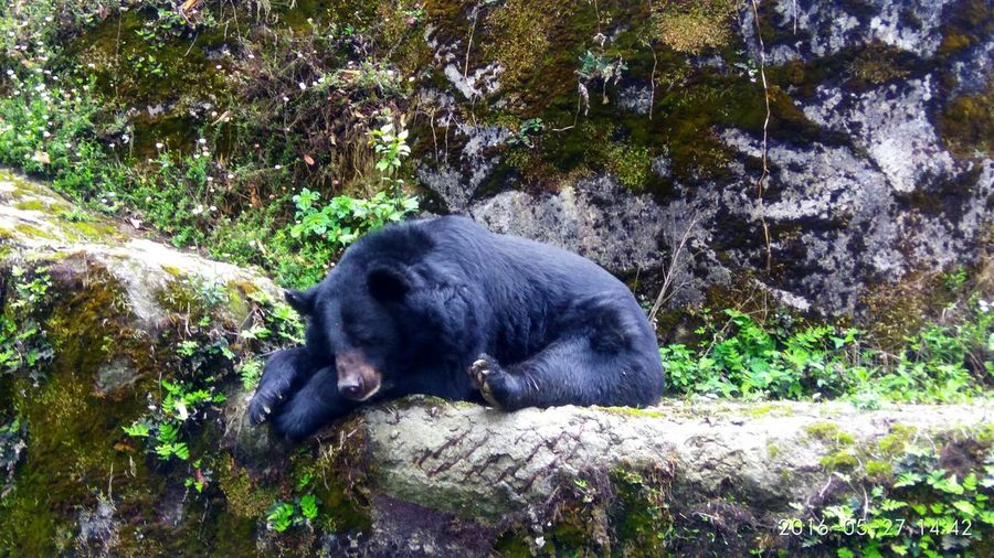 Close-up of bear on rock by trees