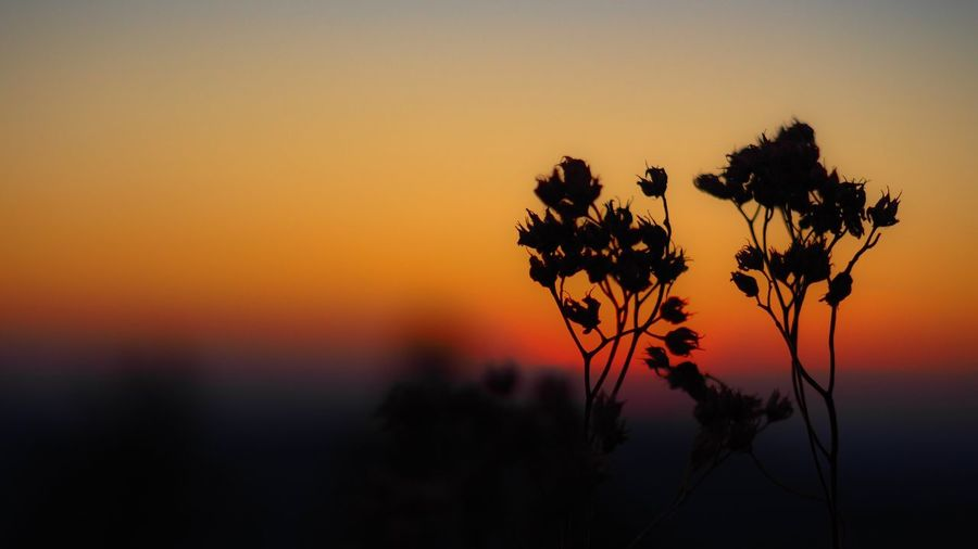 Close-up of silhouette plants against orange sky