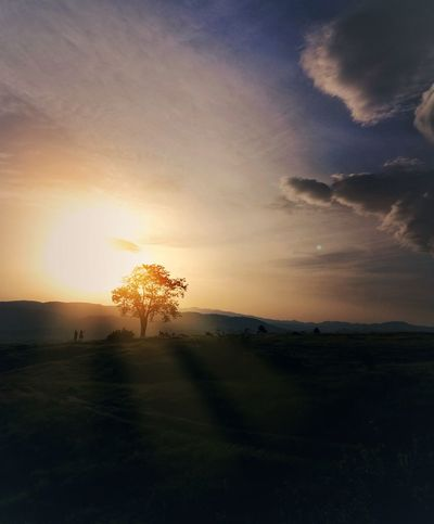 sunset Tree Sunset Sunlight Silhouette Rural Scene Sun Sky Grass Landscape Cloud - Sky Dramatic Sky Atmospheric Mood Thunderstorm HUAWEI Photo Award: After Dark