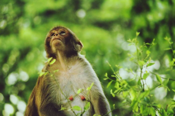 She is so pretty without any makeup. This is called natural beauty Animal Wildlife Animal One Animal Animals In The Wild Mammal Monkey Cute Nature Ape Outdoors Animal Themes Portrait Close-up No People Day Baboon Beauty In Nature EyeEmNewHere Greenery Beauty Beauty In Nature Beautiful Day Followme New Here New To EyeEm Place Of Heart The Portraitist - 2017 EyeEm Awards The Portraitist - 2017 EyeEm Awards EyeEm Selects Sommergefühle Pet Portraits