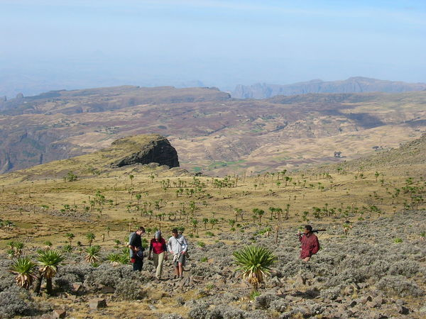 Trekking towards Ras Dashen in the Semien Mountains of Ethiopa Adventure Africa Beauty In Nature Ethiopia Hiking Landscape Lifestyles Mountain Nature Outdoors People Scenics Semien Mountains Trek Trekking