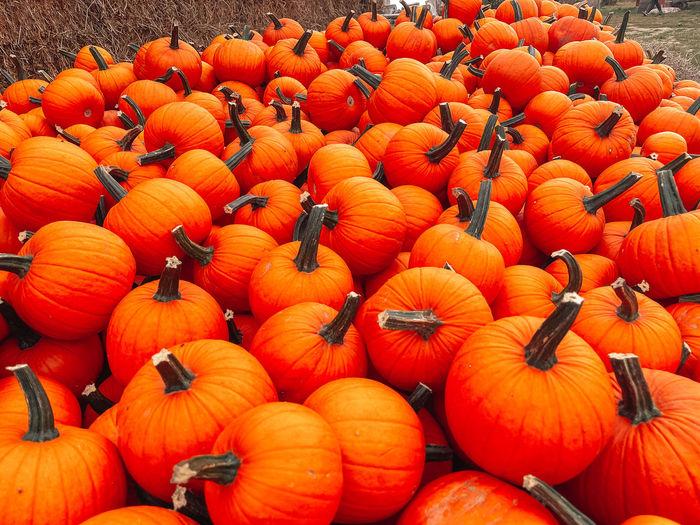 High angle view of pumpkins at market