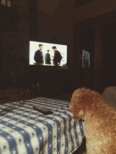 Pet Portraits Watching Tv labradoodle No People Film Industry