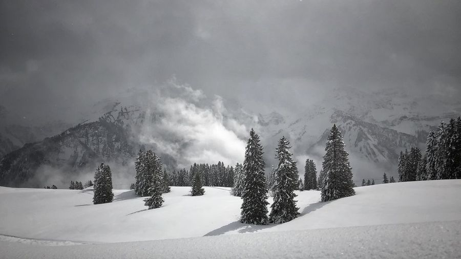 Stormy Weather Outside Photography Outdoor Photography Naturephotography Winter Wonderland Tree Sky Plant Snow Nature Land Cold Temperature Cloud - Sky Winter Mountain Landscape Beauty In Nature No People Snowcapped Mountain Forest Scenics - Nature Day