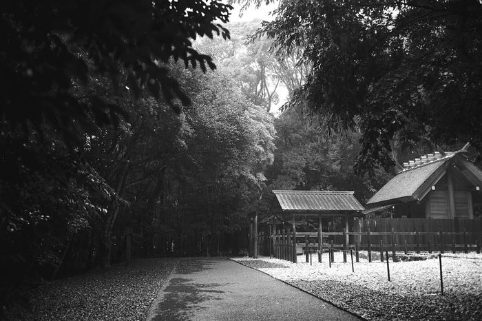 This is a hidden sanctuary which is one of the Ise Grand Shrine. Origin of Japan. Sanctuary Of Truth Hidden Sanctuary In The Forest Monochrome Shinto Shrine Heavy Rain Tree Plant Nature Built Structure No People Architecture Day Water Wet Growth Rain