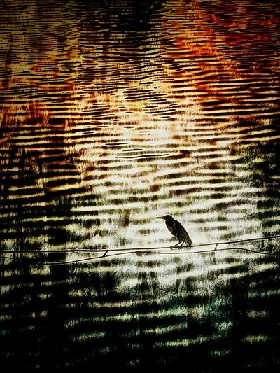 The Lone Ranger Colored Silhouette Textured Surface Textured Ripples Animals In The Wild Full Frame Rippled No People Day Backgrounds Waterfront Outdoors One Animal