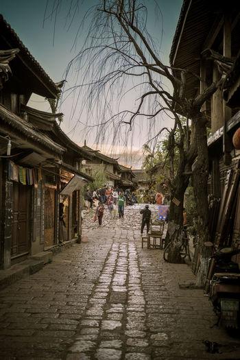 石板路 Shuhe Ancient Town Street Tree 束河古镇