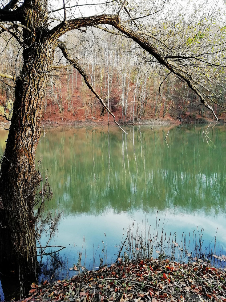 REFLECTION OF TREES ON LAKE