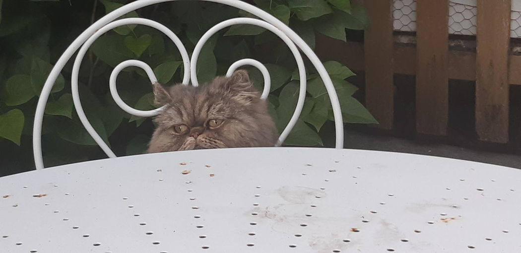 Portrait of a cat looking through metal