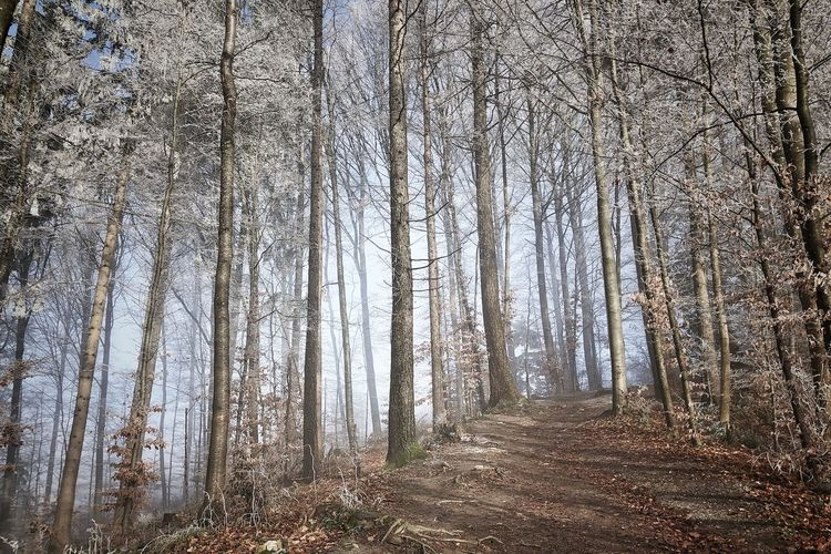 Photographer Zürich Nature Photography Winter Trees And Sky Picoftheday Photooftheday Frozen Winter Wonderland Forest No People Tree Land Plant Nature Day Winter Beauty In Nature WoodLand Outdoors