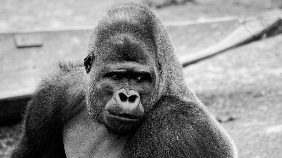Portrait of mature man in zoo