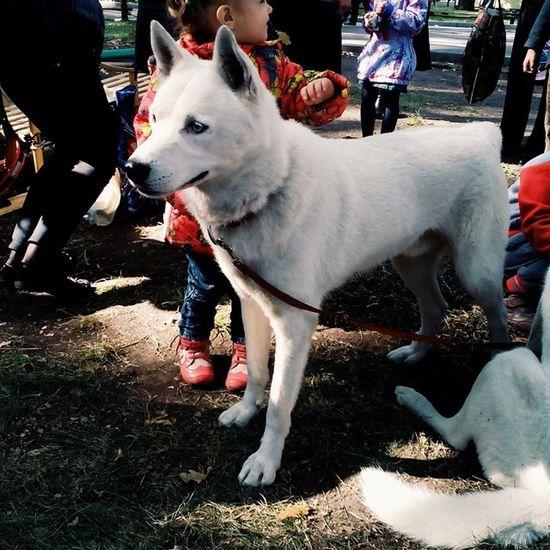 """Выставка-ярмарка """"внутренний туризм вСаратовской области"""". Vscocam Saratov Park Animals dogs Husky саратов горпарк собаки хаски"""