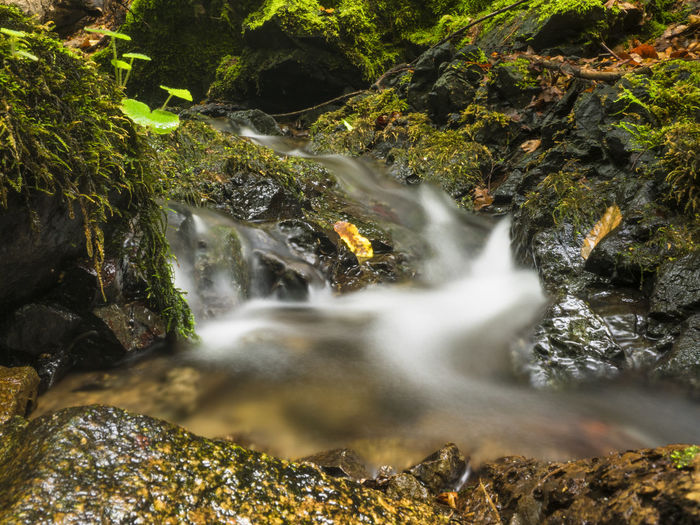 Creek Plants Autumn🍁🍁🍁 Beauty In Nature Blurred Motion Cascade Falling Water Flowing Water Forest Leaves Long Exposure Moss Naturally Nature No People Outdoors Power In Nature Rock Rock - Object Running Water Scenics - Nature Stones Water Waterfall Wilderness