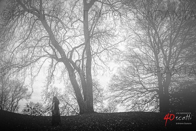 L'inverno è magico.....quando pensi che la luce non sia buona, il cielo piatto, le ombre sotto agli occhi, basta trovare i soggetti giusti per realizzare delle immagini magiche Inverno Silhouette Parco Winter Shadows Garden Nebbia Park Atmosphere Magic Hour