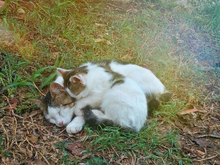 Toscana Cat Followme Puppy Mammaefiglia Lamammaèsemprelamamma Love Amore RePicture Motherhood Nature