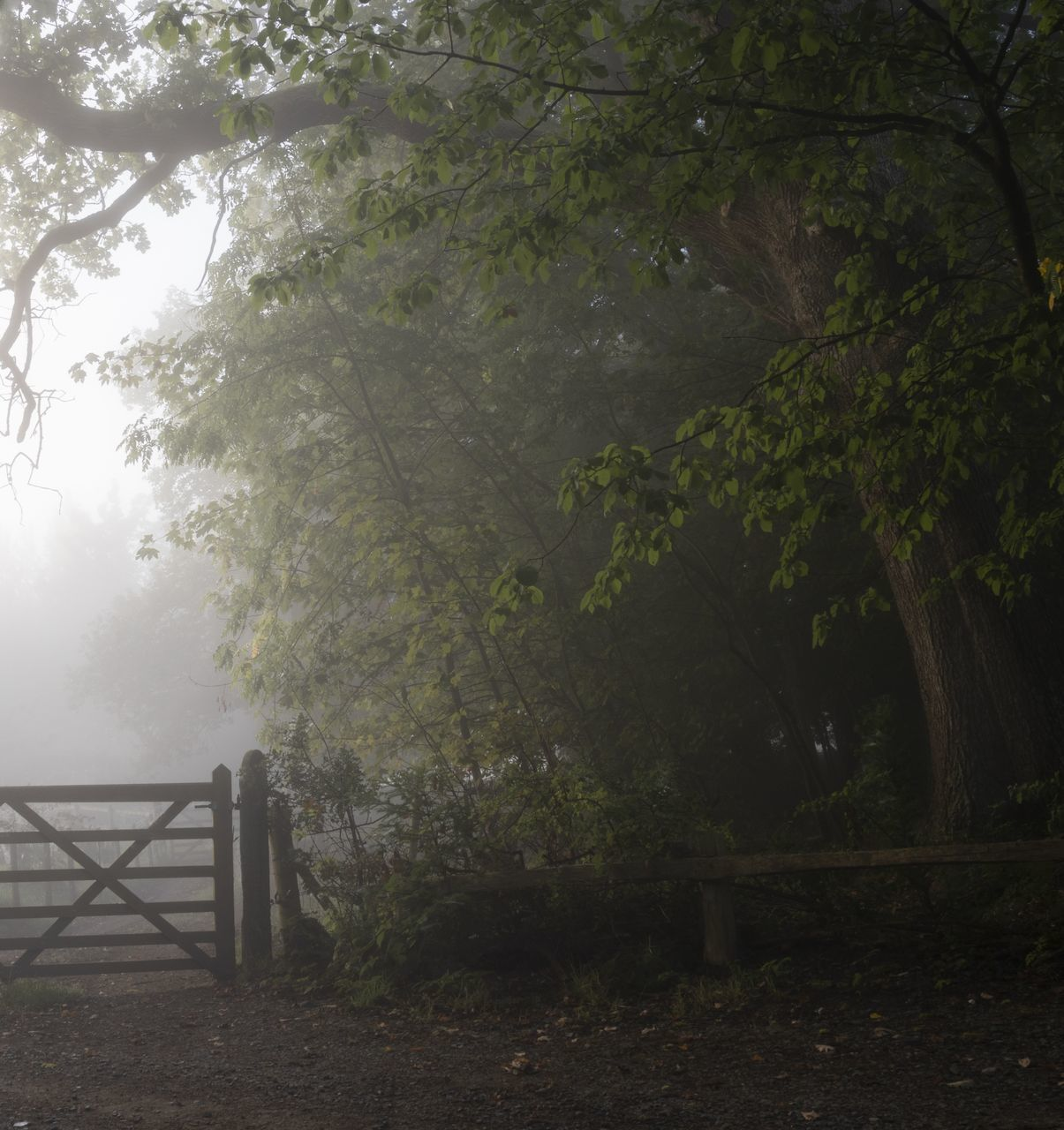 tree, plant, nature, tranquility, growth, land, forest, tranquil scene, beauty in nature, fog, no people, day, outdoors, barrier, railing, boundary, non-urban scene, scenics - nature, fence