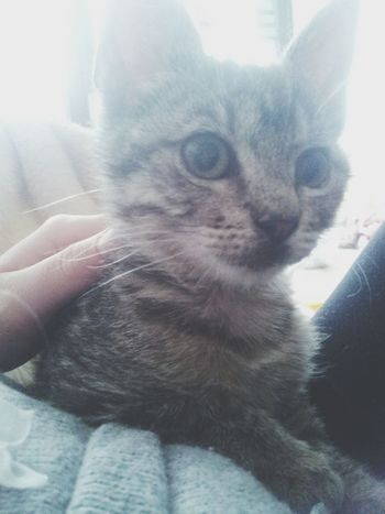 Beauty Cat Little *.*