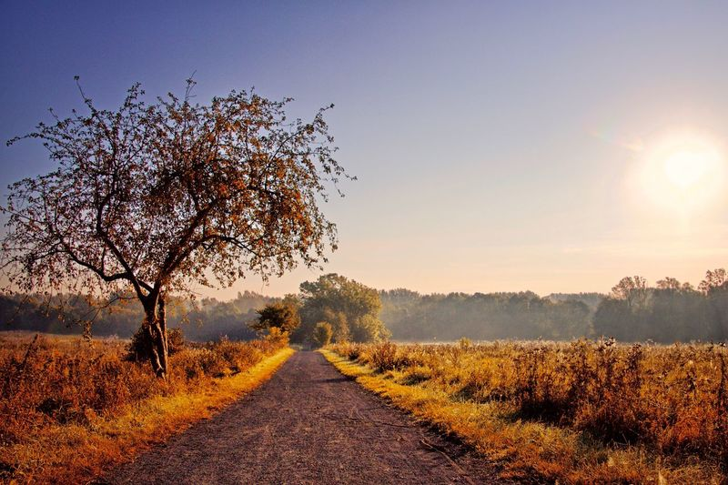 a trail leading into the woods on a beautiful fall morning Tree Road Nature No People Landscape Clear Sky Tranquility Sky Scenics Outdoors Beauty In Nature Day Morning Nature Trail September Late Summer Outdoor Outdoor Photography Discover Berlin The Week On EyeEm
