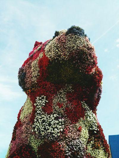 Flowers Jeff Koons Dog Installation