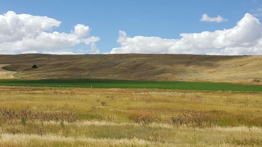 Montana Pasture Montana Beauty Hillside Waves Of Grain