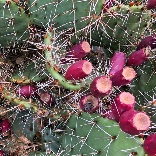 Prickly Plant Nature Cactus