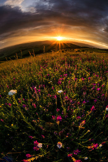 Beauty In Nature Clouds And Sky Flower Flower Head Fragility Freshness Nature No People Perspective Petal Relaxing Moments Spring Flowers Sunset_collection