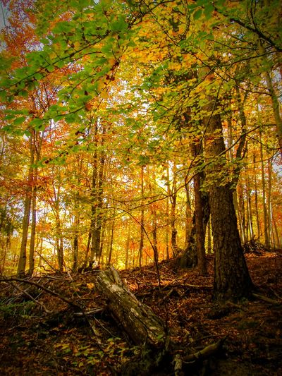 Trees Forest Photography Forest HayedoTejeranegra Hayedo End Of Summer Autumn Autumn Colors Autumn Trees Autumnbeauty Nature Nature_collection Naturelovers Natural Beauty Nature Photography Light Behind Trees EyeEm Nature Lover EyeEm Gallery Check This Out Landscape Landscape_Collection Feel The Journey Colour Of Life