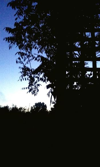 Early Bird Taking Photos Gets The Day Going Eyeemsunrise