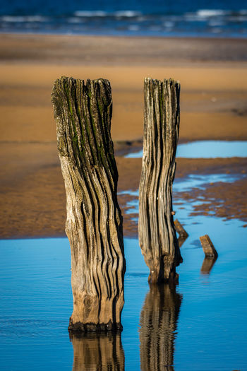 Close-up of driftwood on wooden post at beach