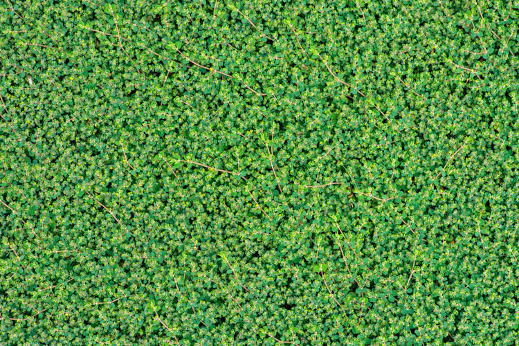 Texture Green Color Full Frame Backgrounds Plant Nature Grass No People Beauty In Nature Foliage Day Lush Foliage Growth Directly Above Outdoors Lawn Field Close-up High Angle View Textured  Pattern Turf Hedge