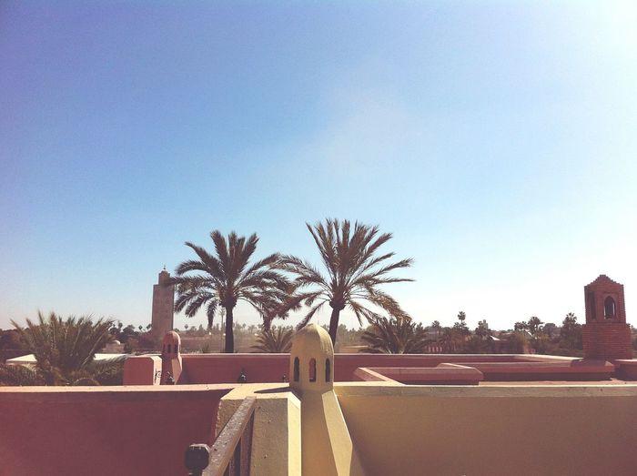 Morroco Palm Trees Sky And City