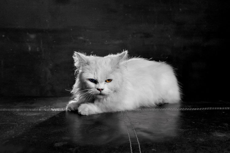 Portrait of white cat on floor