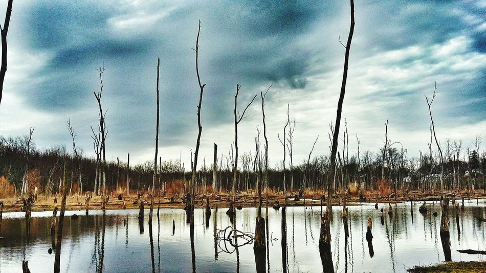 Dead Lands Swamp Check This Out EyeEm Nature Lover EyeEm Outdoors Trees And Water
