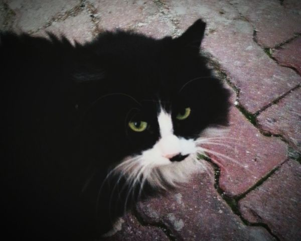 C'mon dude, you can not be an angry cat, dont try so hard Cat♡ Hi! Taking Photos Hello World StreetSpirit Catlovers