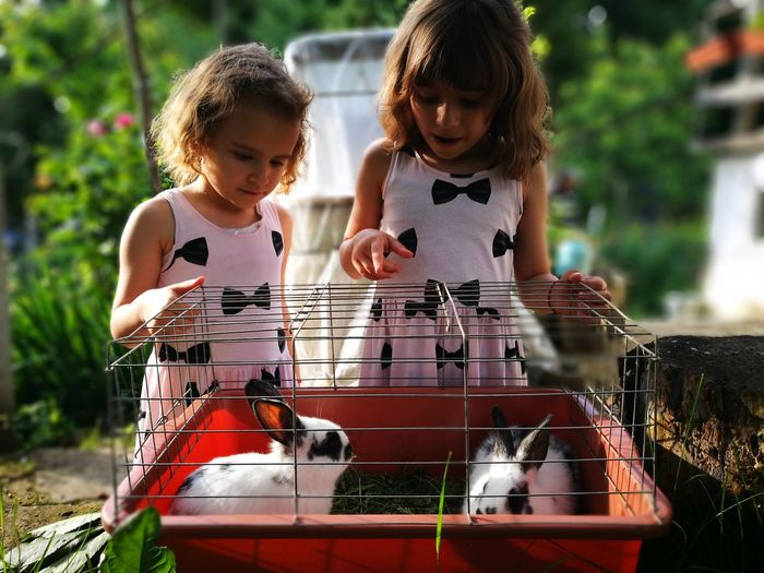 Sisters looking at rabbits in cage at backyard
